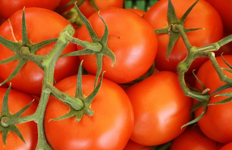 Tomatoes have a LOT of vitamins, so most rodents can eat them safely, but there's more to it than that.