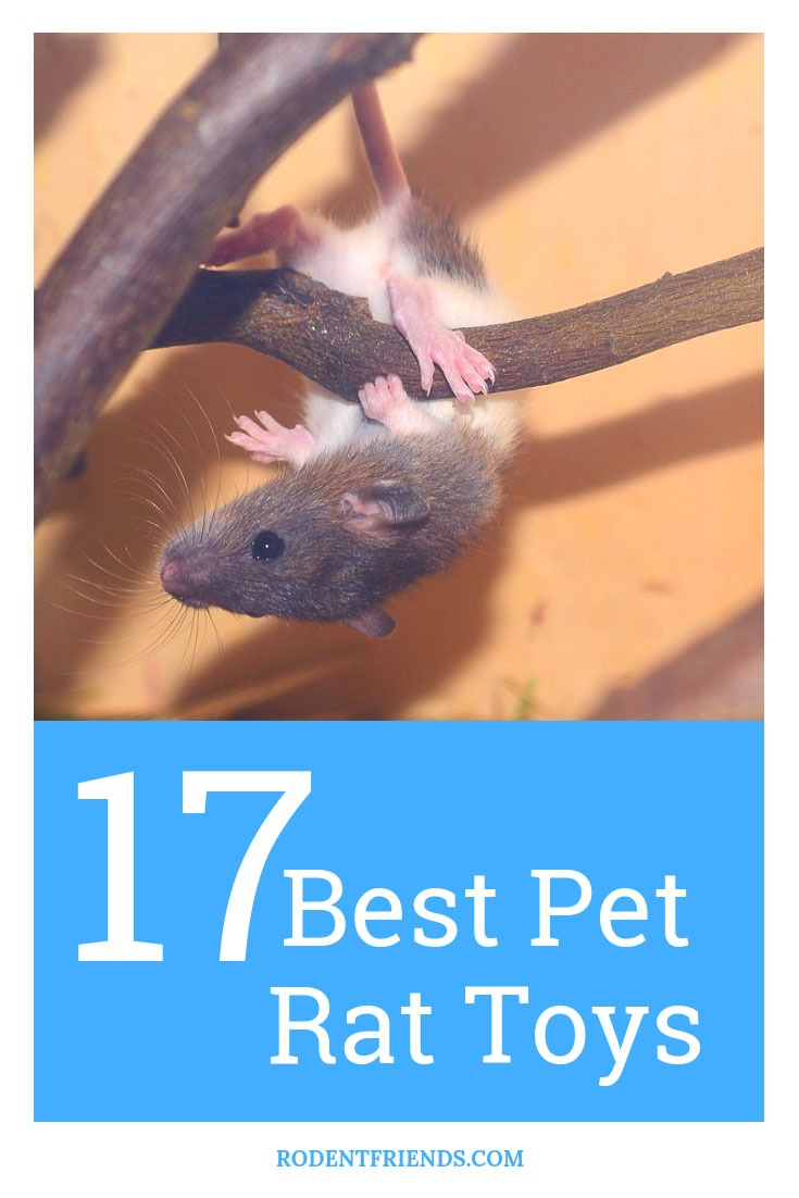 17 Best Pet Rat Toys - the toys for your rodent friends that you can't go wrong with! The little Beds are ADORABLE!