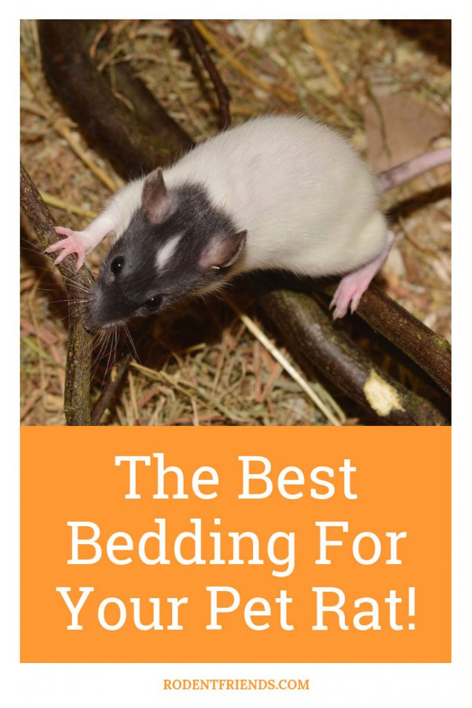 The Best Bedding For Pet Rats - The best choices for pet rat beddings, and what not to use!
