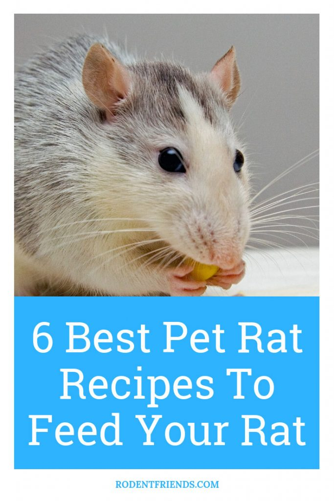 Best Recipes To Feed Your Rat Pinterest Cover